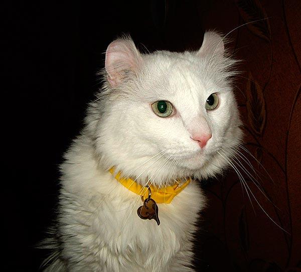 корм для кота брит   Мурлыкающее чудо